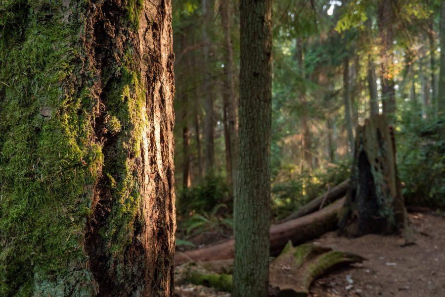 TedOlsonNaturePreserve_TreeWMoss_KeithBrofsky_2021