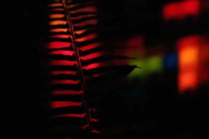 Wintertide Light Art Experience